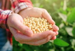 Sementes certificadas garantem aumento de produtividade